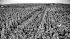 38亿元!济宁市任城区打造出花卉苗木大产业