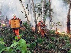 亚马逊雨林经济开发引冲突 NGO不畏强权抗争多年