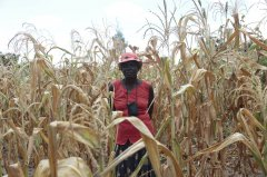 粮食计划署: 津巴布韦面临十年来最严重的饥饿危机