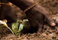 世界土壤日:粮农组织发起运动防止土壤侵蚀