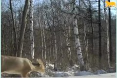 东北虎豹国家公园首次记录到珍稀物种
