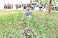"""三亚:新增绿地136公顷 """"海绵城市"""""""