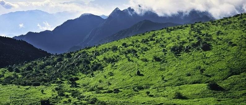 我国森林覆盖率达22.96% 成为全球森林资源增长最多的