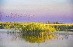 新疆玛纳斯国家湿地公园:做世界候鸟迁徙的