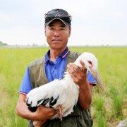 左玉涛:为东方白鹳筑巢守家 与候鸟相伴15载