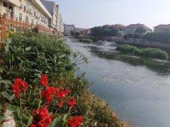 记者巡河|横沥镇新城排渠闯出一条生态