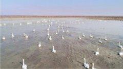 7.5万亩鱼塘全面退出历史舞台 湖北沉