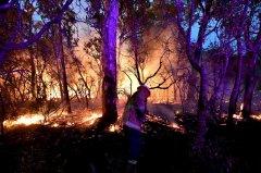 预料气温突破40度加强风 澳洲野火恐失控