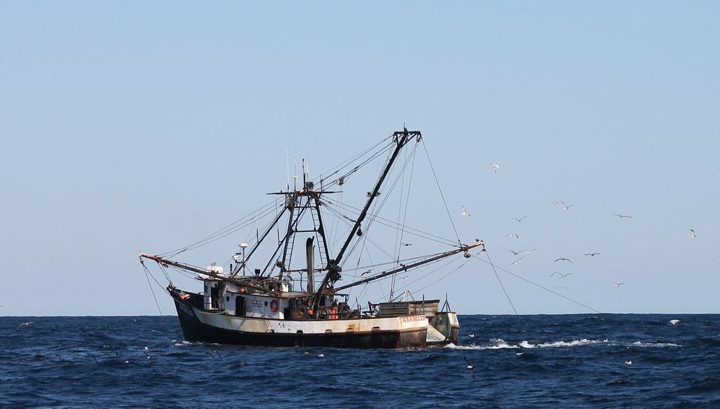 美国西海岸渔场重新开放 拖网渔船罕见获环保团体肯定