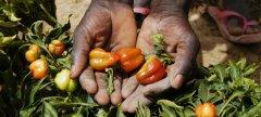 农业部门在减缓气候变化方面具有举足轻重的地位