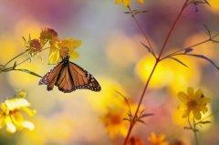 科学家制作昆虫复育蓝图 全面反转灭绝