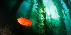 """隐藏于海洋中的""""基于自然的气候解决方案"""""""
