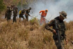 亚马逊雨林去年火灾次数飙升三成