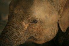2019年斯里兰卡361头大象死于非命 创