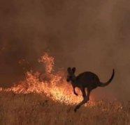 澳洲大火权威分析报告!来自牵挂他们