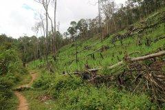 气候暖化、过度伐木威胁马达加斯加 雨林与