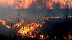 澳洲野火总计烧掉80%蓝山国家公园、50%冈瓦纳雨林
