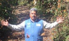 墨西哥帝王蝶保育专家人间蒸发 恐遭盗伐集团毒手