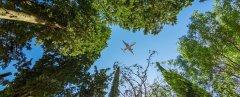 国际航空碳市场启动在即,CCER项目体系亟需