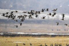"""鸟类的""""生物钟""""被打乱了,气候变暖导致它"""