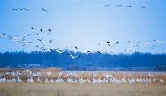 候鸟迁徙季 护鸟志愿者在行动