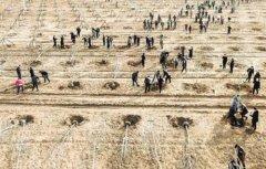 廊坊打造环京津雄区域生态屏障 今年将完成造林19万亩