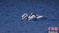 北京监测到140余万只迁徙候鸟