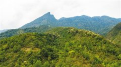 海南鹦哥岭自然保护区鹦哥嘴分站团队守护大山近10年 青春之歌在雨林荡漾