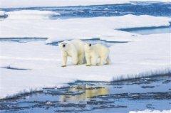 臭氧含量创历史新低形成罕见空洞 别担心,北极出现臭