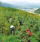 环京津造林绿化提质提速