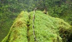 UNEP与IUCN联合建立基于生态系统的气