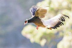 野生动物保护,不仅是禁食和禁猎