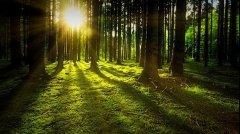 """微气候 """"主宰"""" 林下植物多样性"""