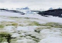"""南极变""""绿""""了!全球暖化让南极绿藻大量增生,将对气"""