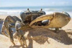温室效应没在开玩笑!海洋酸到螃蟹幼