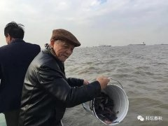 长江口生态修复:从荒漠化走向生机勃勃 ――访河口生