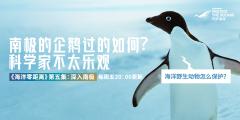 """数企鹅、拍鲸尾、采集""""重口味""""DNA,我们在南极做科"""