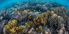 健康的海洋有助抗击流行病