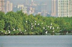 广东2处湿地上榜国家重要湿地名录