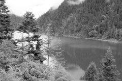 岷江上游森林植被恢复、生态功能提升,专家