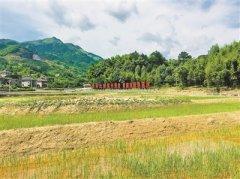 """达标排放仍遭投诉,杭州""""环境医院"""""""