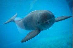 保护动物名录31年终迎大改,江豚等升一级,
