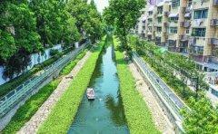 """种草养藻,南京市明御河""""销号""""黑臭"""