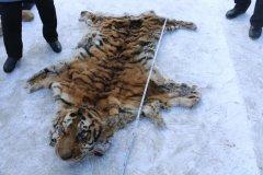 缴获虎皮、虎骨、虎尾!他们因猎杀野