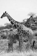 """给全球物种编一本""""大家谱"""" 新路线图为保护生物多样性奠定基础"""