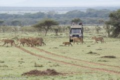 保育是新的商业模式 肯尼亚马赛地主:我的土地已属于野生动物