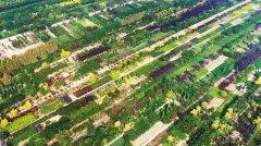 """定州着力创建国家森林城市 增林扩绿,让""""林在城中、城在林中"""""""