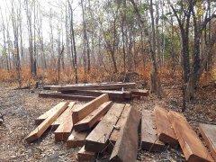 穿着制服的盗伐集团 官商联手摧毁柬埔寨保护区林地