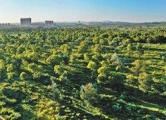 榆林,绿色版图在延展