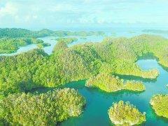 """99位植物学家联手 万余种植物物种入册 这个岛屿""""绿色家底""""摸清了!"""